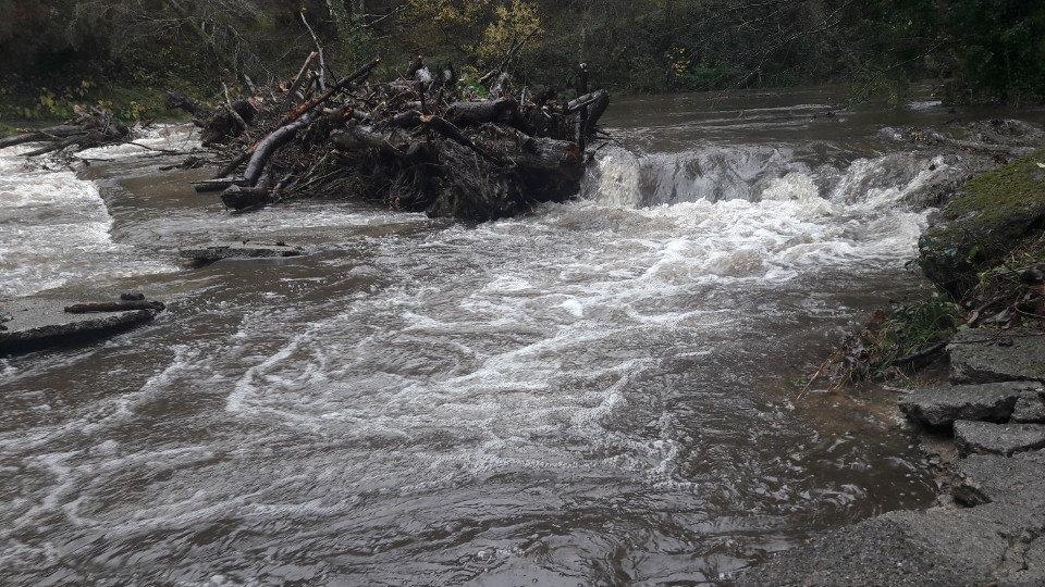 Tronco en el río Eo. JOSÉ Mª ÁLVEZ