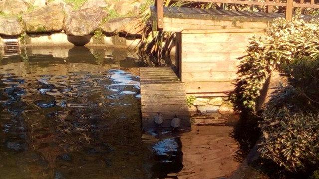 Tortugas en el estanque del parque de Cantarrana, en Viveiro. AMA